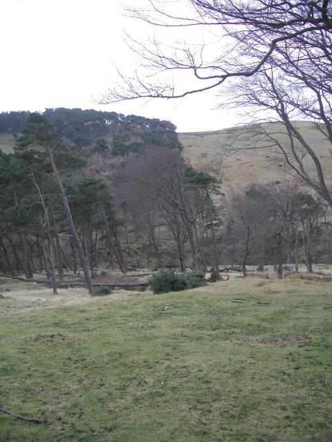 Woods below Woodhouselee Hill
