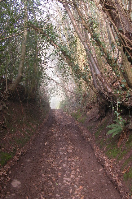 Track through Hayes Coppice
