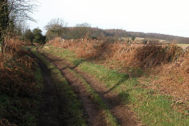 Green lane to Hazel Wood from Welsh Newton