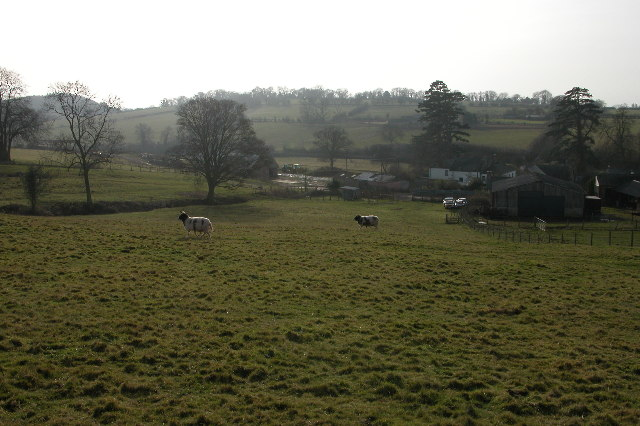 Jacob sheep on a farm at Welsh Newton