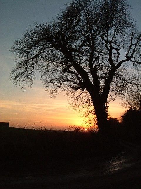 Tree at sunset, Bentley lanes