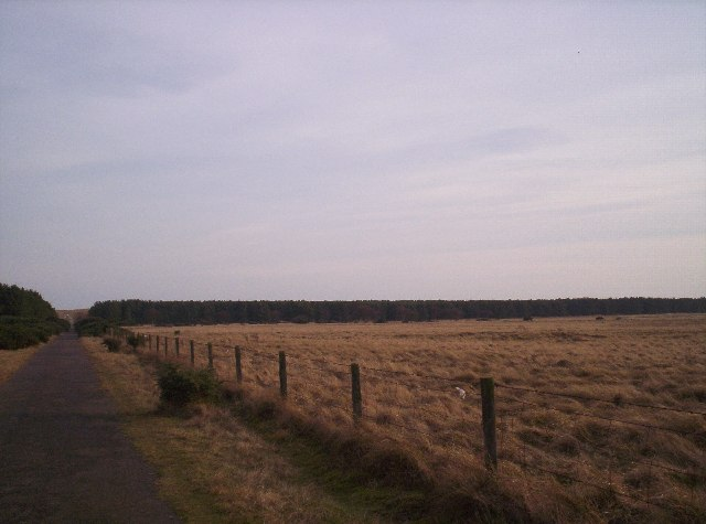 Fields, woodland and track to dunes