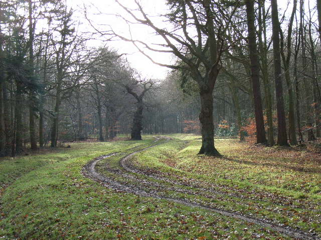 Track in Holliday's Plain, Windsor Forest