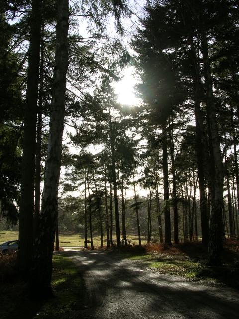 Oakley car park, near Burley, New Forest