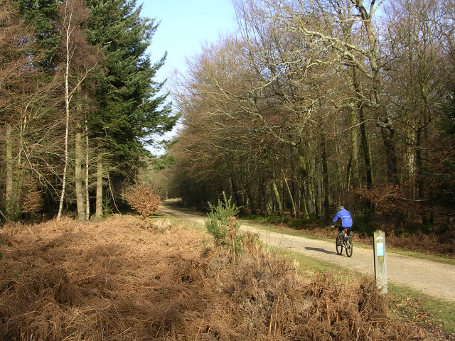 Off-road cycle path through the South Oakley Inclosure, New Forest