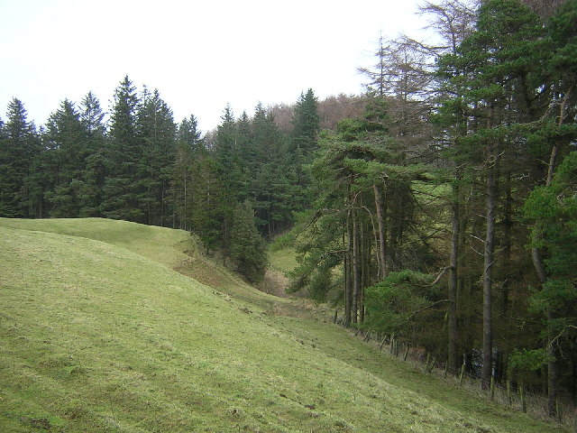Ardoch Burn Gorge