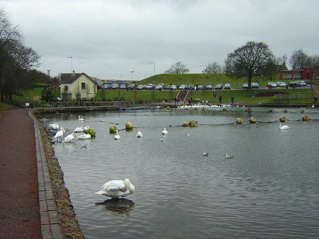 Swans at Lanark Loch
