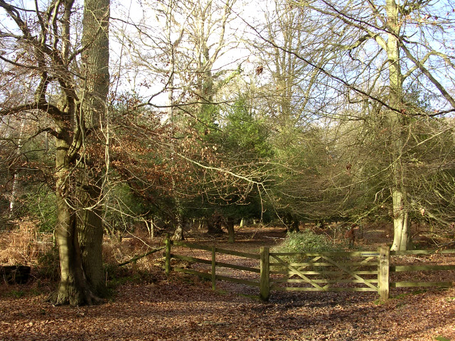 Gate from the South Oakley Inclosure to Berry Wood, New Forest