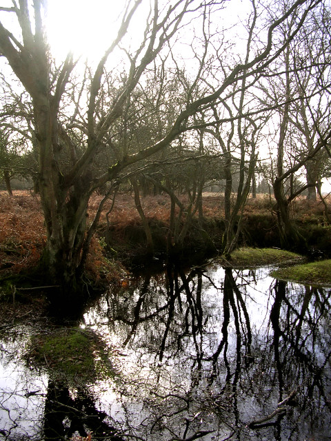 Wintry pond north of Berry Wood, New Forest