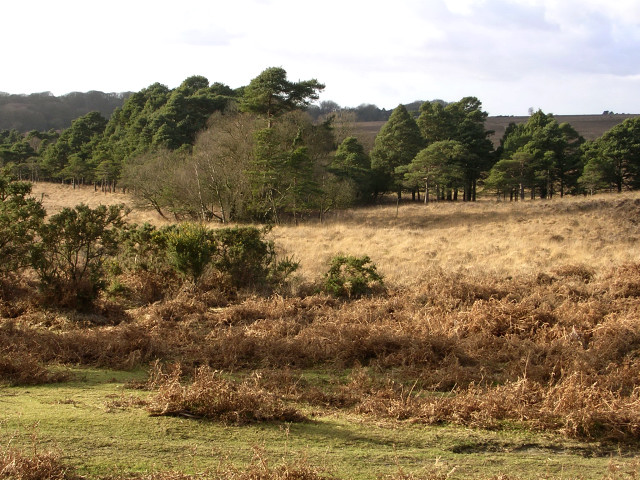 View west towards Harvest Slade Bottom, New Forest