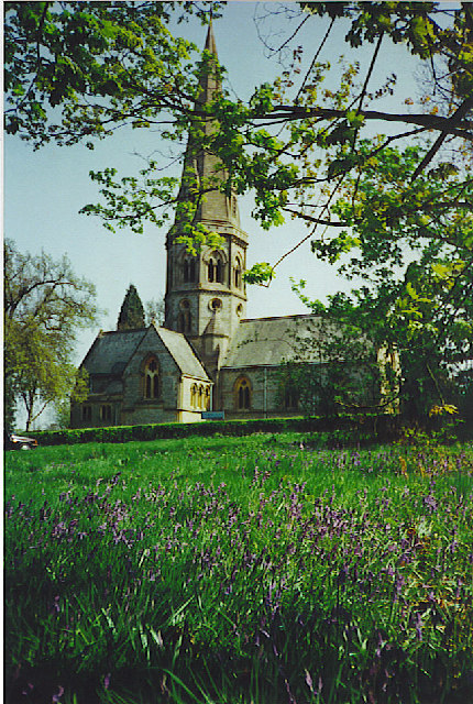 Ranmore Church and Bluebells.