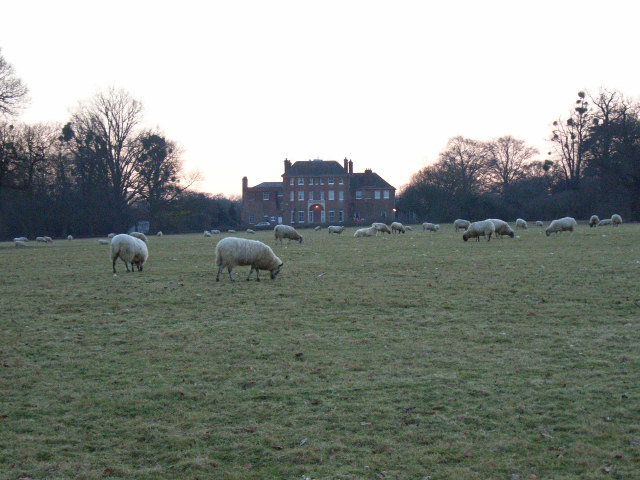 Sheep in front of Forest House, Windsor Great Park