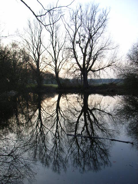 Ox Pond, Windsor Great Park