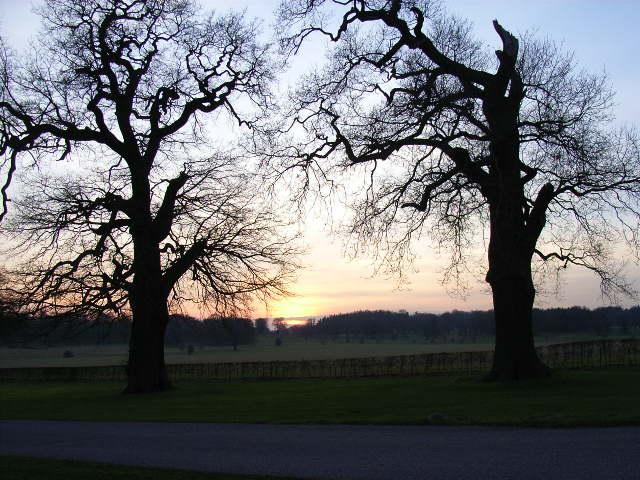Dusk in Windsor Great Park