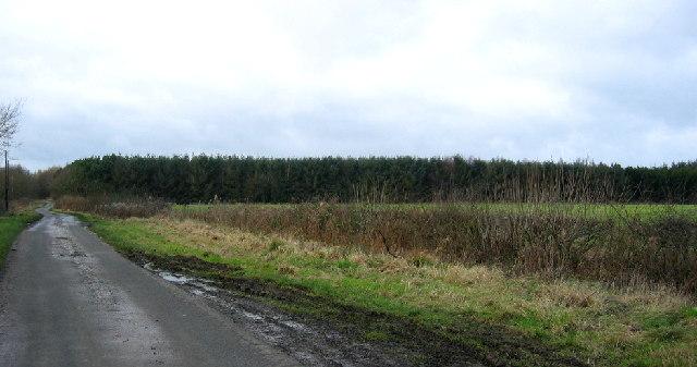 Hillhead Plantation