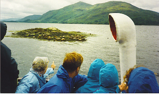 Seals on Black Rock, Loch Linnhe.