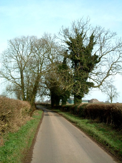 Ivy clad trees