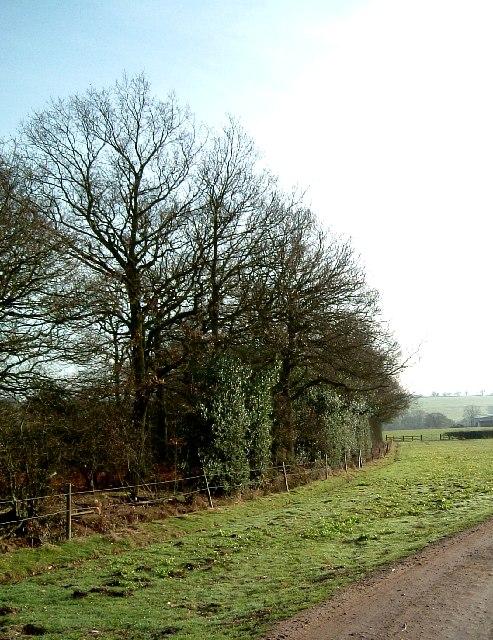 Hedgerow near Dudley Wood Farm