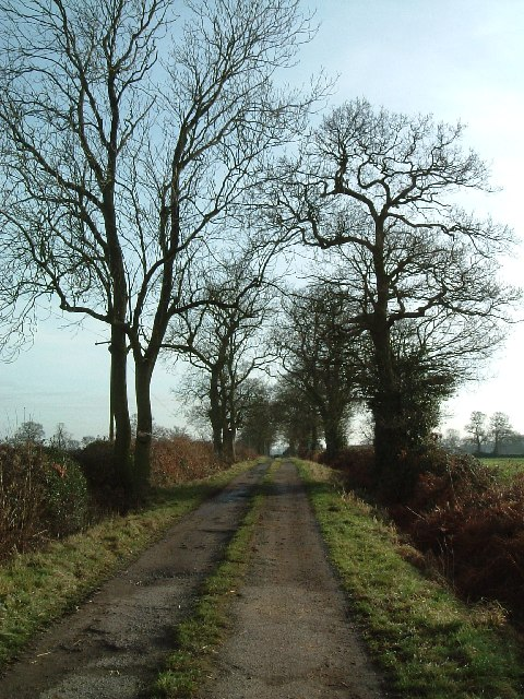 Lane to Newland Farm, Bentley