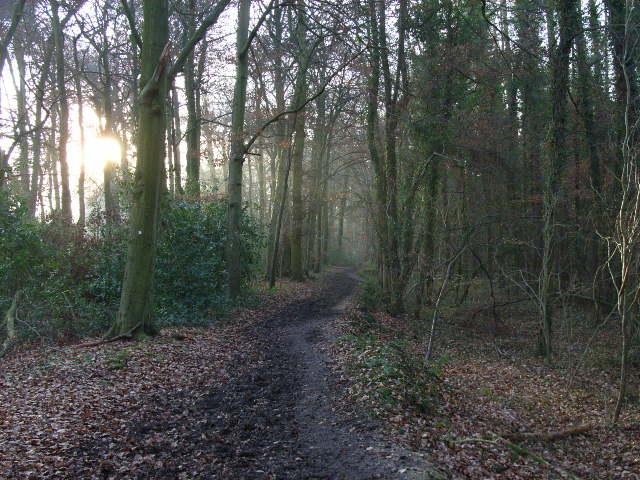The bridleway in Littlebottom Wood