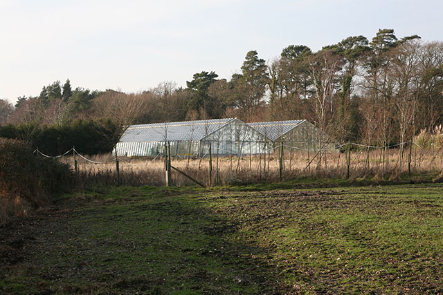 Glass houses at eastern end of Beckheath Nursery, East End
