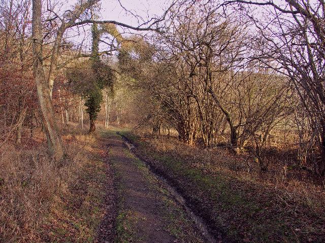 Track through Penley Wood