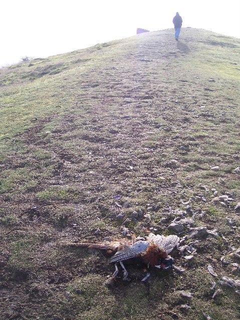 Death on Midsummer Hill