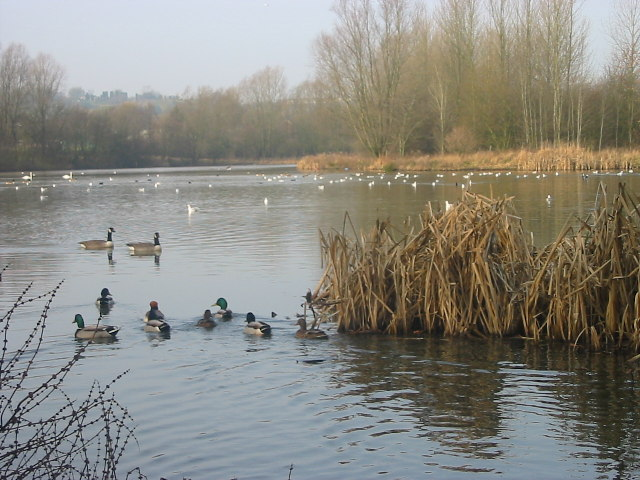 Ford Green Nature Reserve