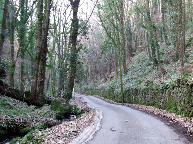 woodland beside steep hill