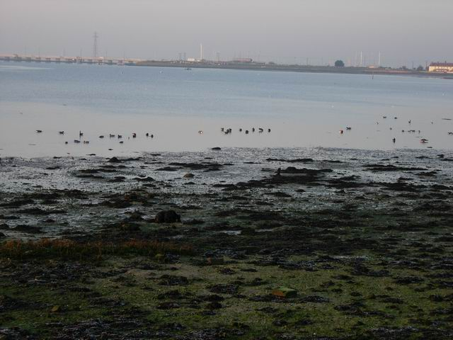 Mudflats and Brent Geese