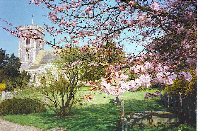 West Meon Church through the Cherry Blossom.