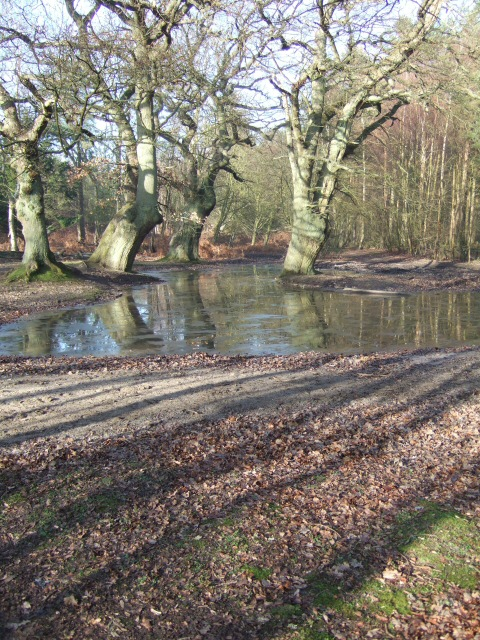 Tankards Pond