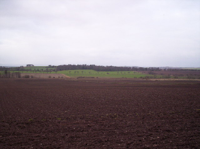 Fields and Kinblethmont Woods