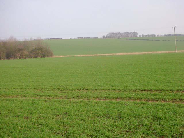 Wheat Fields of Barnwell