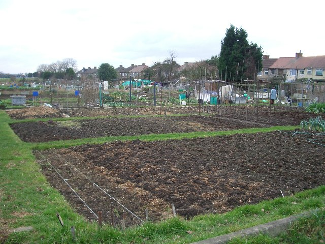 Hainault Allotments