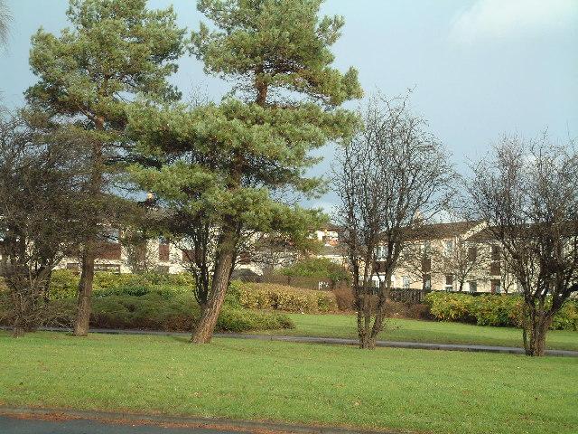 Tree screened housing