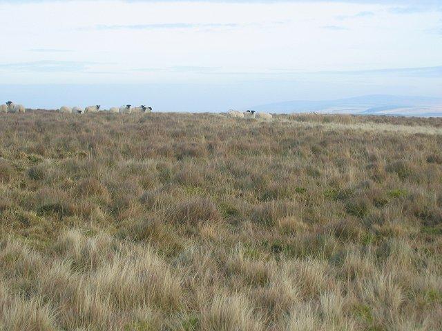 Rough grazing, Moorfoot Hills.