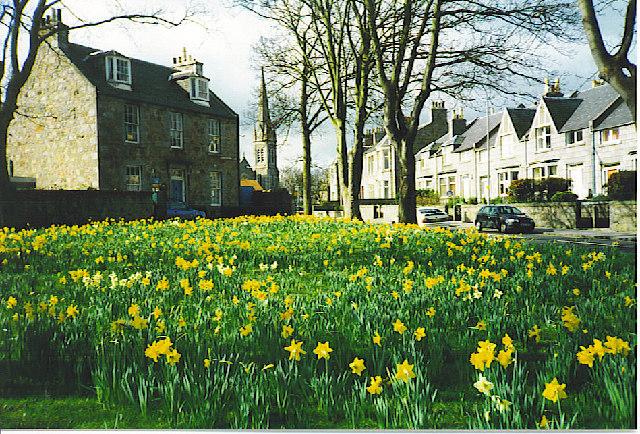 Spring in Ferryhill.