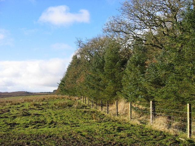 Catcherside North Plantation