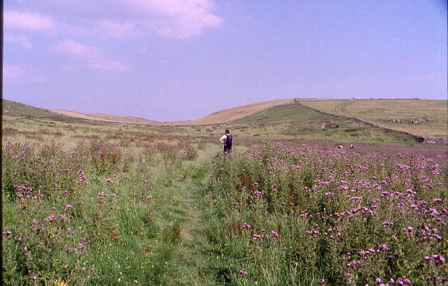 Pasture of Thistles, near Pilsbury