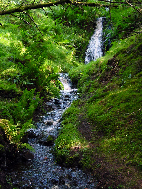 Stream in Lora Forest