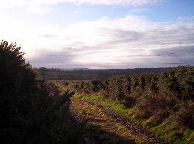 Track to Leuchland