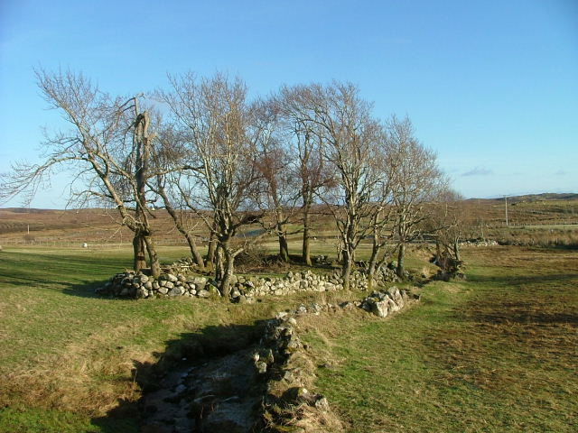 Trees and Drystane Dyke