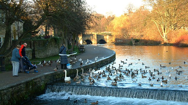 Feeding The Ducks at Bakewell, Derbyshire.