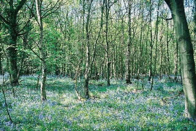 Hazeldell Wood