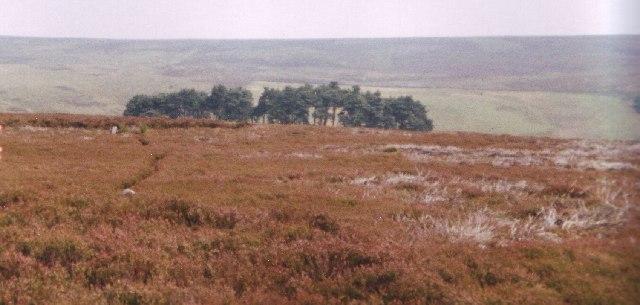 Plantation Bilsdale Moor