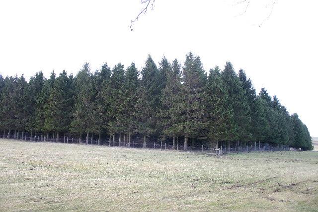 Mirebank Plantation