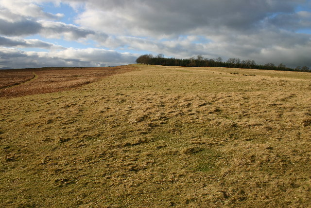 Rough Grazing on Heughscar Hill