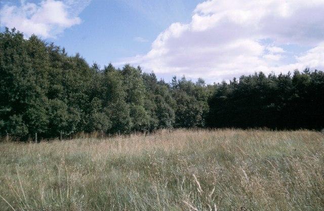 Eastfield plantation