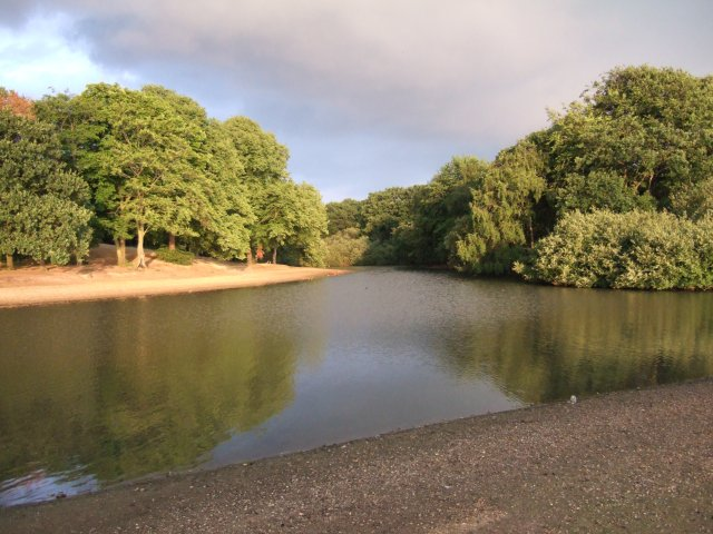 Lake and wood in Wanstead Flats